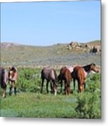 Fillies Day Out Metal Print