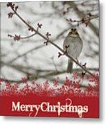 Finch Christmas Metal Print