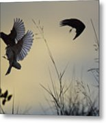 Finches Silhouette With Leaves 5 Metal Print
