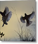 Finches Silhouette With Leaves 6 Metal Print