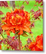 Fine Art Floral Art Prints Canvas Orange Rhodies Baslee Troutman Metal Print