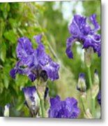 Fine Art Floral Prints Purple Iris Flowers Canvas Irises Baslee Troutman Metal Print