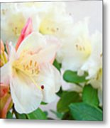 Fine Art Florals Prints White Pink Rhodies Rhododendrons Baslee Troutman Metal Print