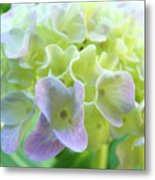 Fine Art Prints Hydrangeas Floral Nature Garden Baslee Troutman Metal Print