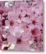 Fine Art Prints Spring Pink Blossoms Trees Canvas Baslee Troutman Metal Print