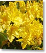 Fine Art Prints Yellow Rhodies Floral Garden Baslee Troutman Metal Print
