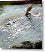 Fine Feathered Fisherman Metal Print