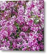 Fine Wine Cafe Apple Blossoms Metal Print