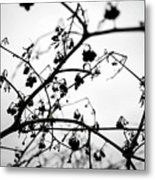 Fineart-nature-4 Metal Print