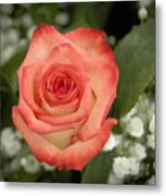 Fire And Ice Rose Metal Print