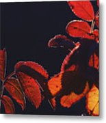 Fire In Hands  Metal Print