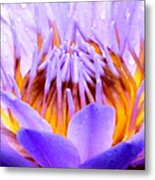 Fire In The Lily Metal Print