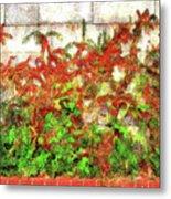 Fire Thorn - Pyracantha Metal Print