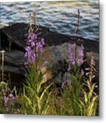 Fire Weed Looking At Lake Superior Metal Print