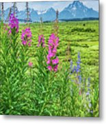 Fireweed In The Foreground Metal Print