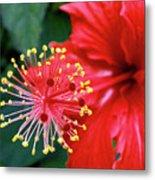 Fireworks - Hibiscus Metal Print