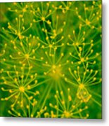 Fireworks Of Dill Flowers Metal Print