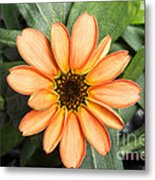 First Flower Grown Aboard Iss Metal Print