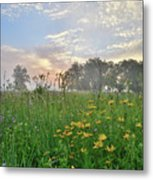 First Light In Glacial Park Metal Print