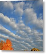 First Light On Glacial Park Sugar Maples Metal Print