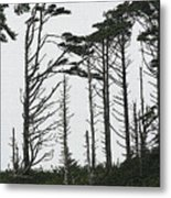 First Line Trees Along The Pacific Ocean Metal Print