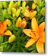 First Orange Lillies Metal Print