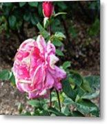 First Prize Rose Hybrid Tea Metal Print