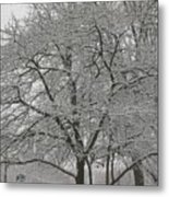 First Snowfall Of The Season Metal Print