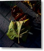First To Fall Metal Print