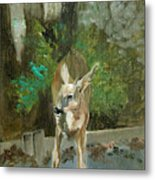 First Young Buck Pad Metal Print