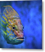 Fish Frown Story Metal Print