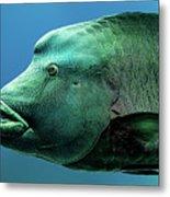 Fish Lips Metal Print