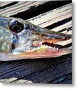 Fish Mouth Metal Print