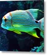 Fish No.3 Metal Print