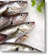 Fish On Ice Metal Print