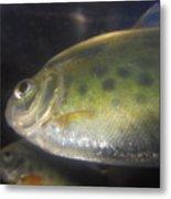 Fish Reflection Metal Print