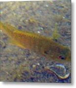 Fish Sandy Bottom Metal Print