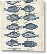 Fish Species Historiae Naturalis 08 - 1657 - 13 Metal Print