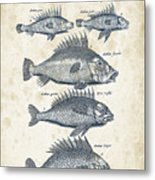 Fish Species Historiae Naturalis 08 - 1657 - 16 Metal Print