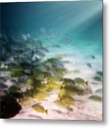 Fish Swim In The Light Metal Print