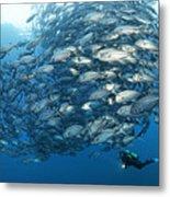 Fish Watch Metal Print