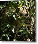 Fishing Cat Metal Print