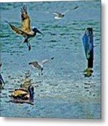 Fishing Pelican And Seagulls Metal Print