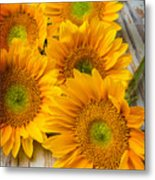 Five Moody Sunflowers Metal Print