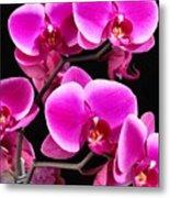 Five Orchids  Metal Print