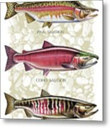 Five Salmon Species  Metal Print