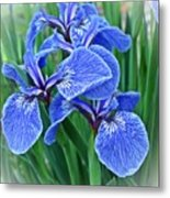 Flag Iris Blues Metal Print