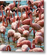Flamboyance Of Flamingos Metal Print