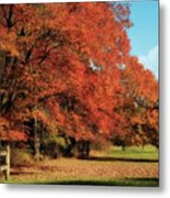 Flame Trees Metal Print