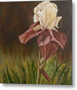 Flaming Bearded Iris Metal Print